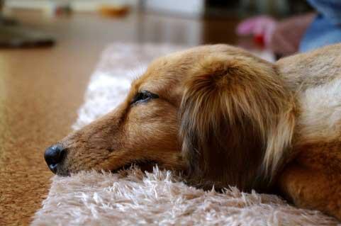 熟睡できないのは眠る前の習慣が関係しているかも?眠る前にやってはいけない6つの習慣